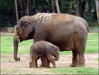 woman-fuck-elephant-photos-dildo
