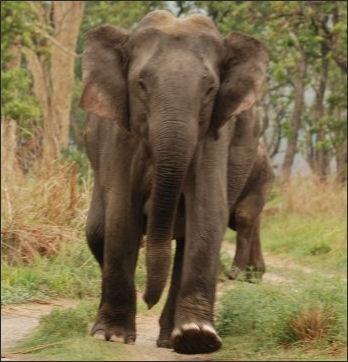 We Were Driving Near The Lake And Spotted A Bull Elephant Who Was Running Very Quickly
