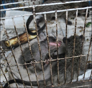 ILLEGAL ANIMAL TRADE IN ASIA | Facts and Details