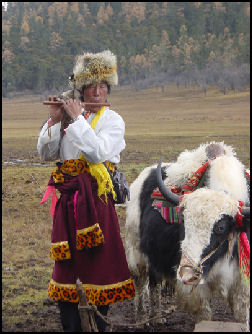 20080229-Tibetan herder and yak in Yunnan NP 22.jpg