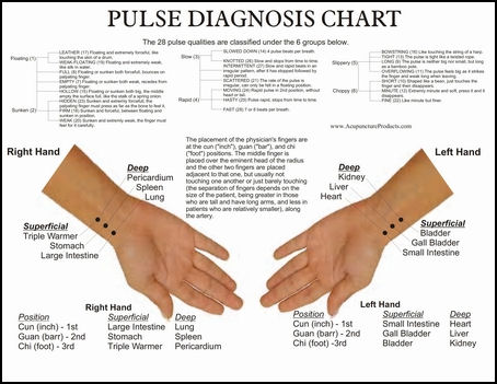 20080311-Accupuncture products pulse diagnosis22.jpg