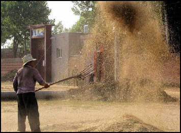 20080316-agri-wheat-winnowing Nolls.jpg
