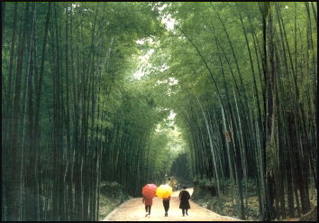 Plants In China Bamboo Original Garden Plants And Forests Facts