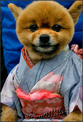 Million dollars house million dollar home - Dogs In Japan Dog Beauty Salons Love Of Dogs Hachiko