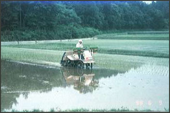 RICE: ITS HISTORY, AGRICULTURE, PRODUCTION AND RESEARCH