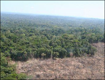 deforestation of the rainforests essay Deforestation essaysearth without forests is a picture that most of humankind presently could not conceive forests cover much of the planet's land area they are.