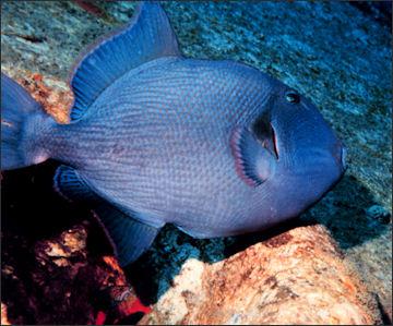 Saltwater Fish Eat Fish Eating Fish 2017 Fish Tank