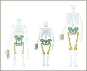 20120201-Bipedalism.jpg