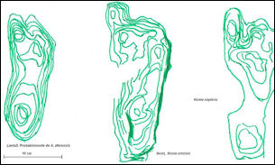 20120201-Homo_footprints.jpg