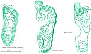 20120201-Homo_footprints.jpg