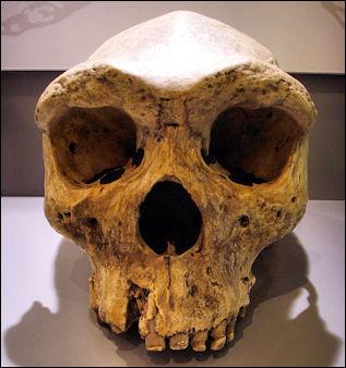 20120202-Broken_Hill_Skull.jpg