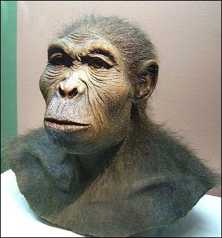 20120202-Homo_habilis.JPG