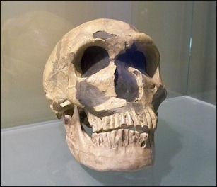20120205-Crane_Neandertal.JPG