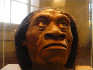20120205-Homo_floresiensis_-_reconstruction.JPG