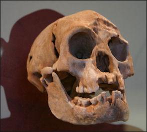 20120205-Homo_floresiensis_Smithsonian.jpg