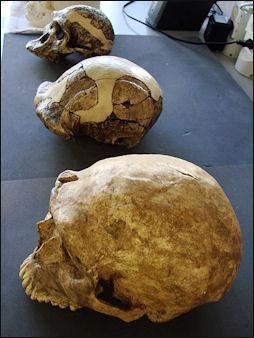 20120205-Homo_neanderthalensis_comparison_(University_of_Zurich).JPG