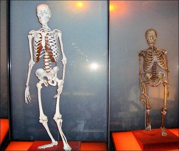 20120205-Neanderthal_and_homo_sapiens.jpg