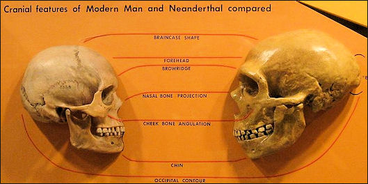20120205-Sapiens_neanderthal_comparison.jpg