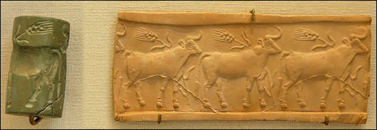 20120208-Cylinder seal cattle.jpg