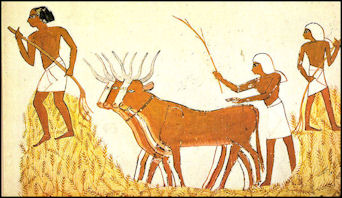 AGRICULTURE AND LIVESTOCK IN ANCIENT EGYPT | Facts and Details