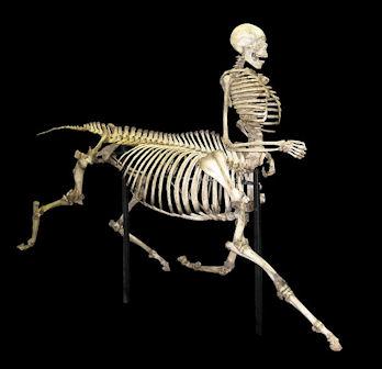 20120219-Centaur_skeleton.jpg