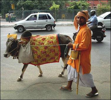 20120501-Cow_on_Delhi_street.jpg