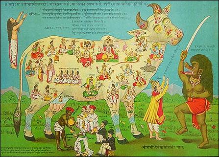 20120501-Sacred_cow2.jpg
