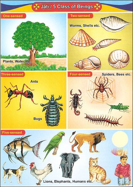 20120502-Hierarchy_of_Beings 2.jpg