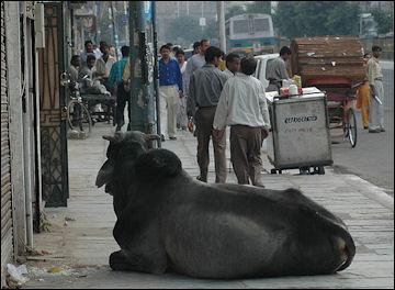 20120502-sagrado_Nova-Deli_India.jpg