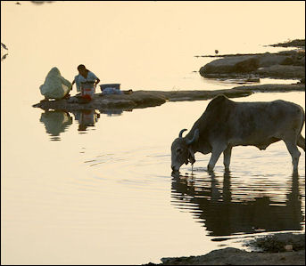 20120513-Women_washing_and_cow_drinking_at_a_river_in_Rajasthan_India.jpg