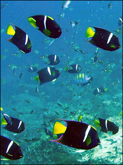 20120517-Reef_Fish_at_Lighthouse_site.jpg
