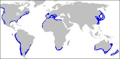 20120518-Carcharodon_carcharias_distmap.png