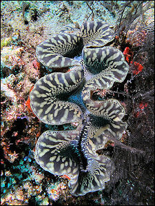 Mollusks Mollusk Characteristics And Giant Clams Facts