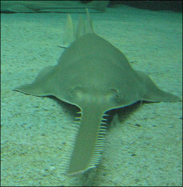Shark Stingray Jpg