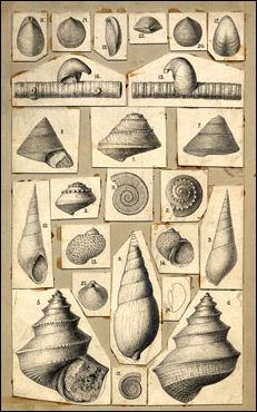 20120518-mollusks_Fielding_Bradford_Meek.jpg