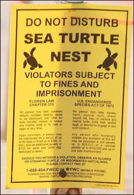 20120519-Sea_Turtle_Nest_-_posted.JPG
