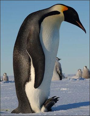 prostitute penguins