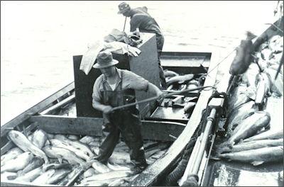 20120521-Loading_salmon.jpg