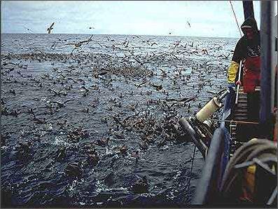 20120521-Seabirds_longlinersm.jpg.jpeg
