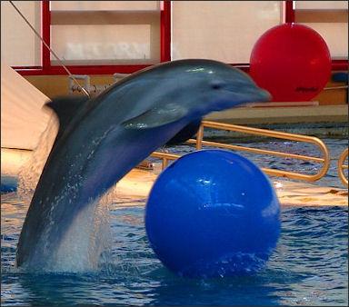 20120522-Dolphin_(1).jpg