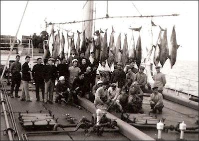 20120522-Dolphinnfishing.jpg