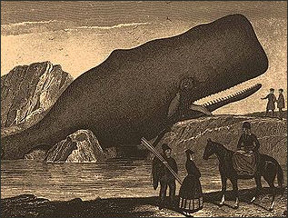 Sperm whales crayons 1800 consider, that