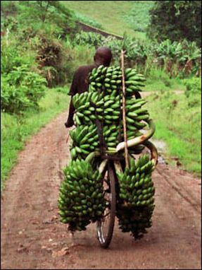 BANANAS—: THEIR HISTORY, CULTIVATION AND PRODUCTION | Facts