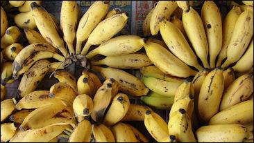 20120525-Banana_cluster.JPG
