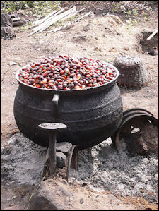 20120525-Palm_oil_production_in_Jukwa_Village Ghana.jpg