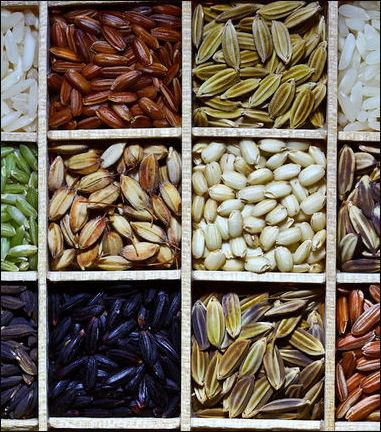 20120525-Rice_diversity.jpg
