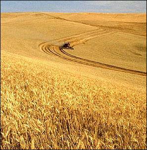 20120525-Wheat_harvest.jpg