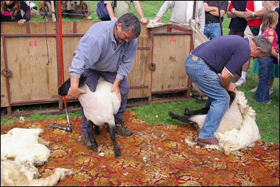 20120529-wool -Sheep_Shearing.jpg