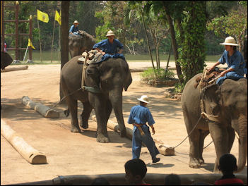 20120531-elephant-TECCdragginglogs.jpg