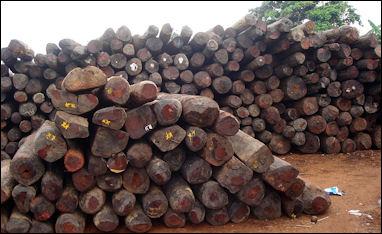 20120531-madagascarIllegal_rosewood_stockpiles_003.jpg